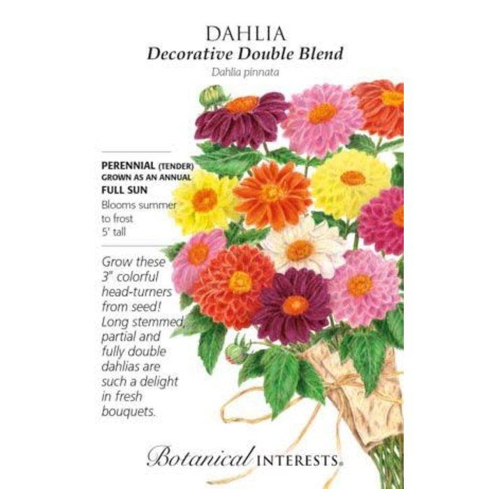 Seed Dahlia Decorative Double Blend - Dahlia pinnata