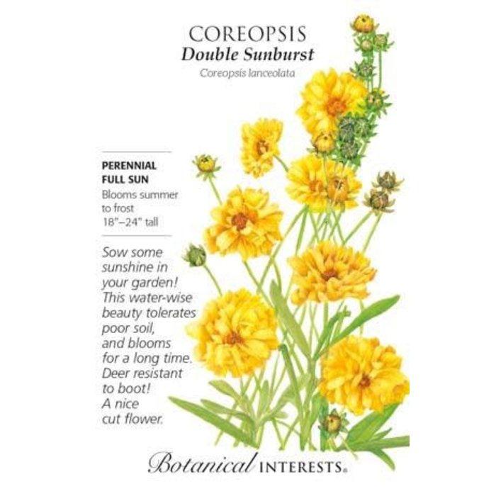 Seed Coreopsis Double Sunburst - Coreopsis lanceolata
