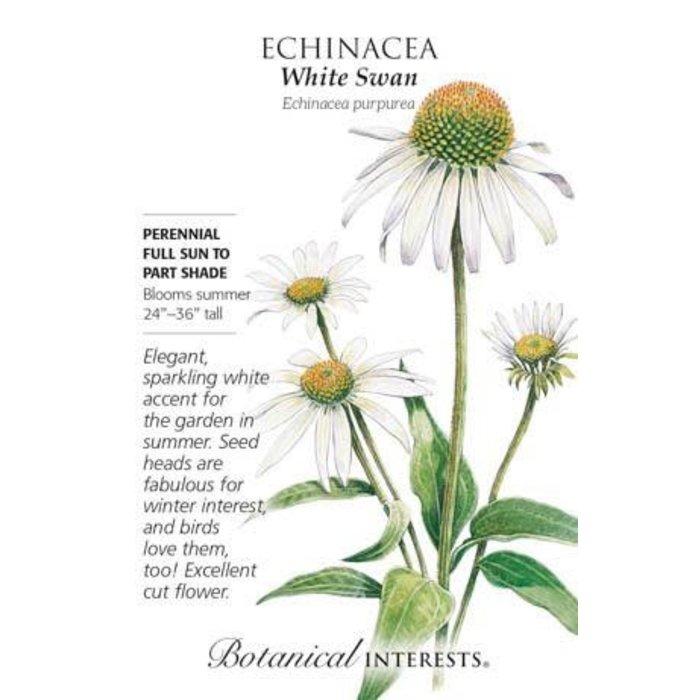 Seed Echinacea White Swan - Echinacea purpurea