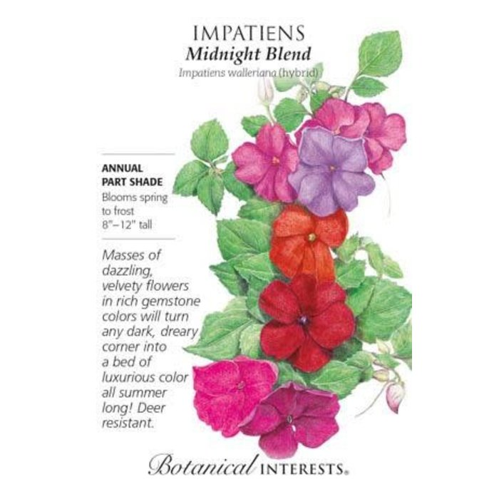 Seed Impatiens Midnight Blend - Impatiens walleriana hybrid