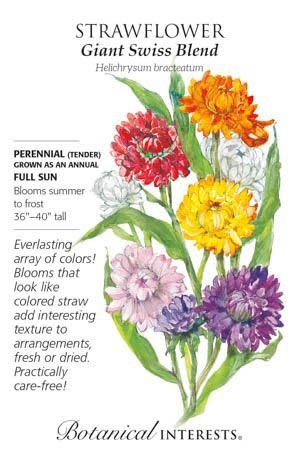 Seed Strawflower Swiss Giant Blend - Helichrysum bracteatum