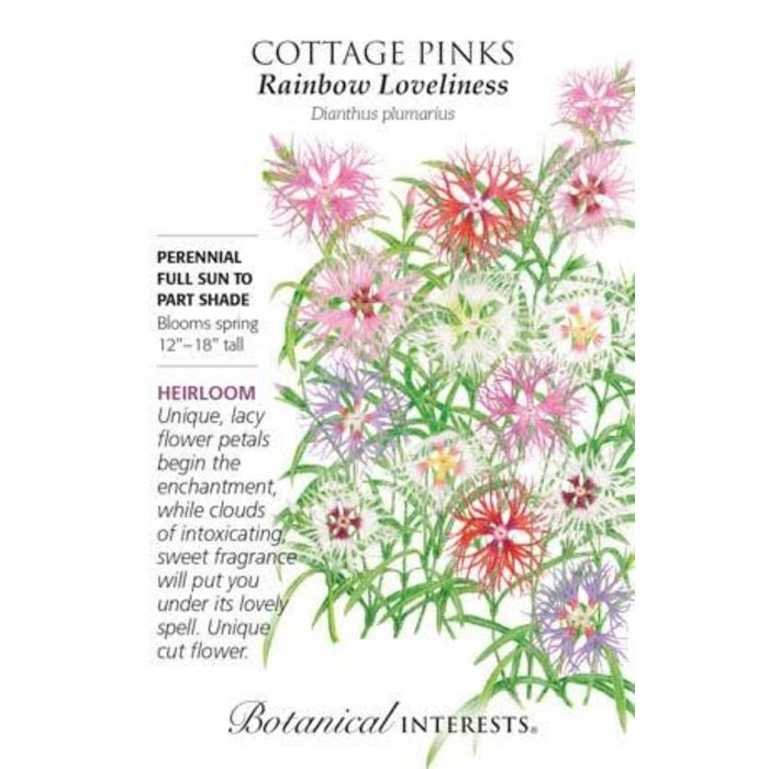 Seed Cottage Pinks Rainbow Loveliness - Dianthus plumarius