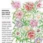 Seed Cottage Pinks Rainbow Loveliness - Dianthus plumarius