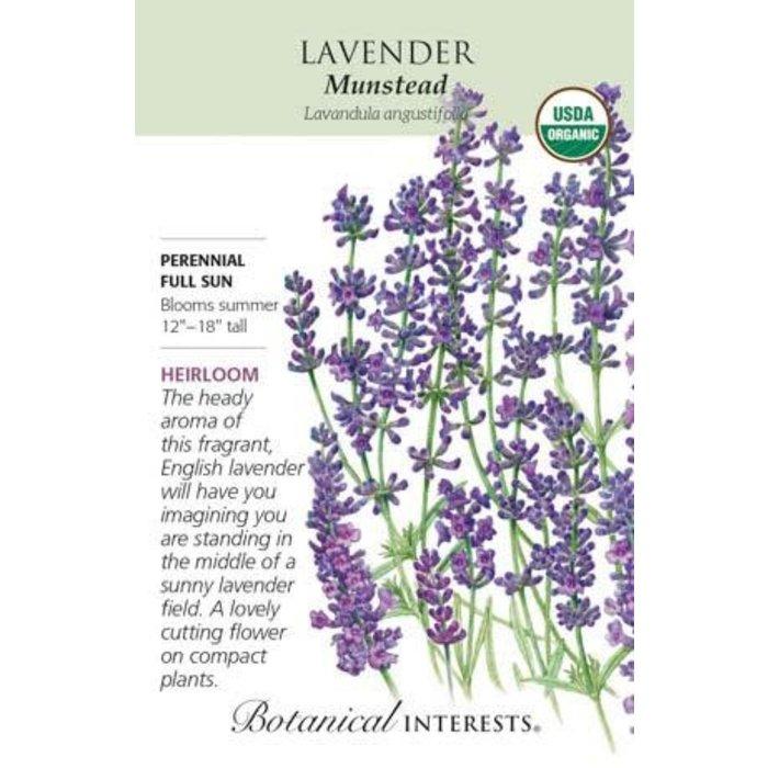 Seed Lavender Dwarf Munstead Organic Heirloom - Lavandula angustifolia