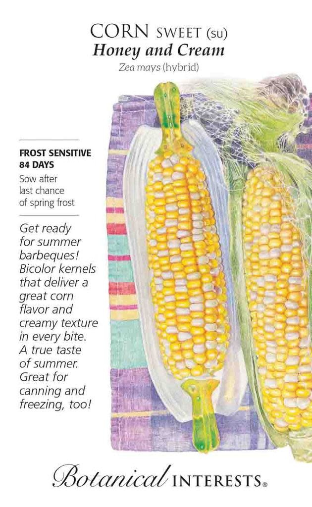 Seed Corn Sweet Honey and Cream (Bicolor) - Zea mays (hybrid) - Lrg Pkt