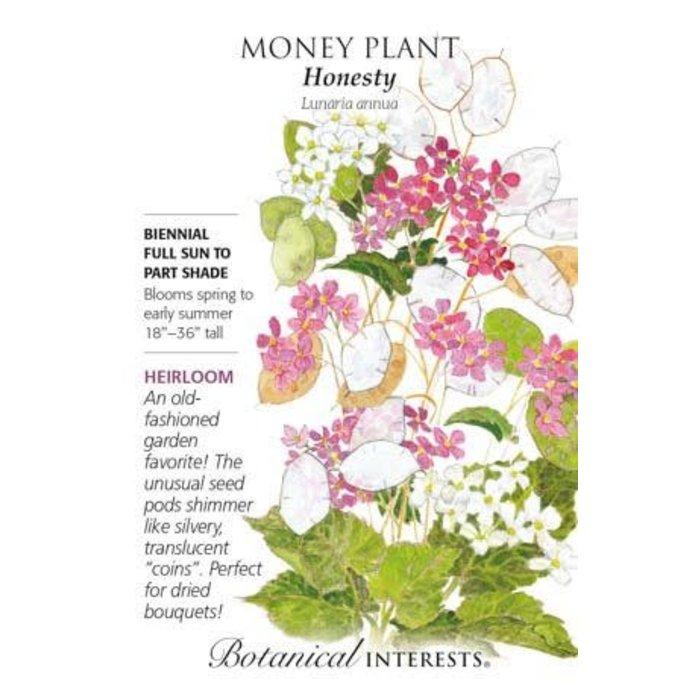 Seed Money Plant Honesty Heirloom - Lunaria annua