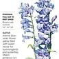 Seed Penstemon Rocky Mountain Blue Heirloom Native - Penstemon strictus