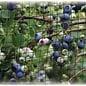 Bird-X Garden Netting 7'x20' Dalen