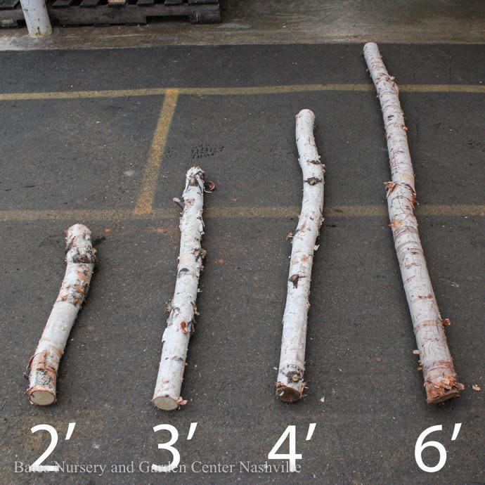White Birch Pole 3ft ea