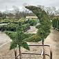 Topiary Star #5 Thuja occ Smaragd/Emerald Green Arborvitae No Warranty