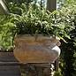 Pot Grecian Bowl w/Handle 20x16 Antq Terracotta