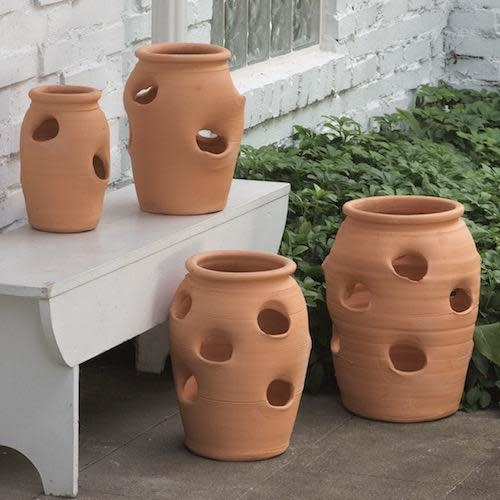 Pot Strawberry Jar 2-Gallon Terracotta