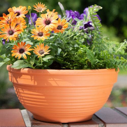 "Pot Planter Bowl 3.5"" w/Lines Terracotta"