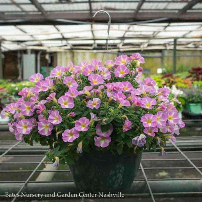 10Hb Hanging Basket Fancy Annual 19.99
