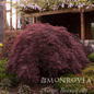 #5 STK Acer pal var diss Crimson Queen/Japanese Maple Red Weeping