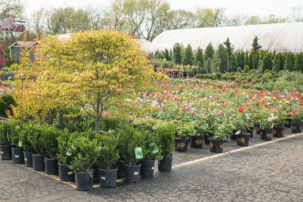 Bates Nursery and Garden Center Named Best Nursery and Garden Center in Nashville