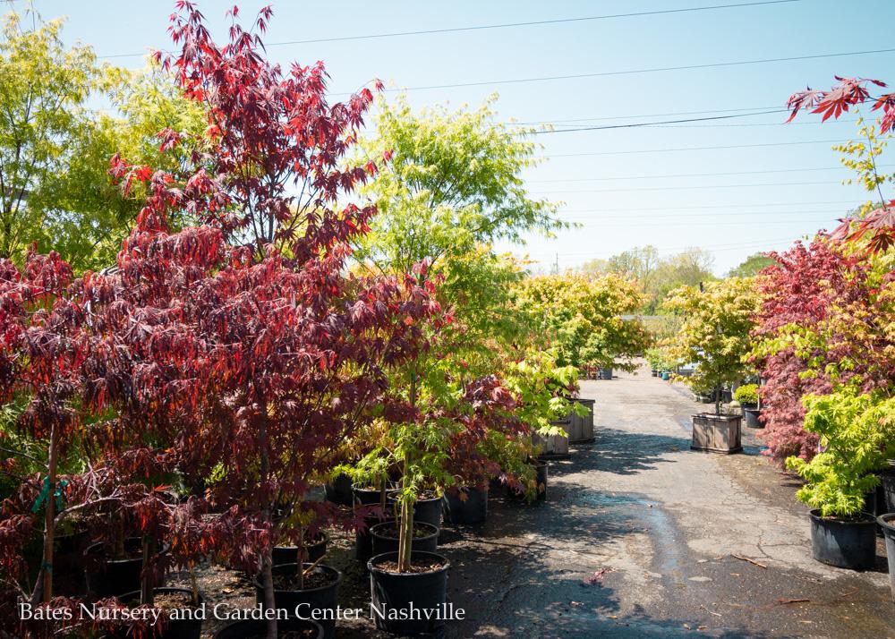 Bates Nursery and Garden Center Named Nashville's Best Nursery and Garden Center for 15th Year