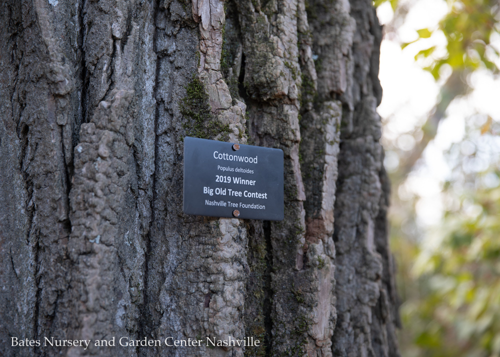 Big Old Tree Contest