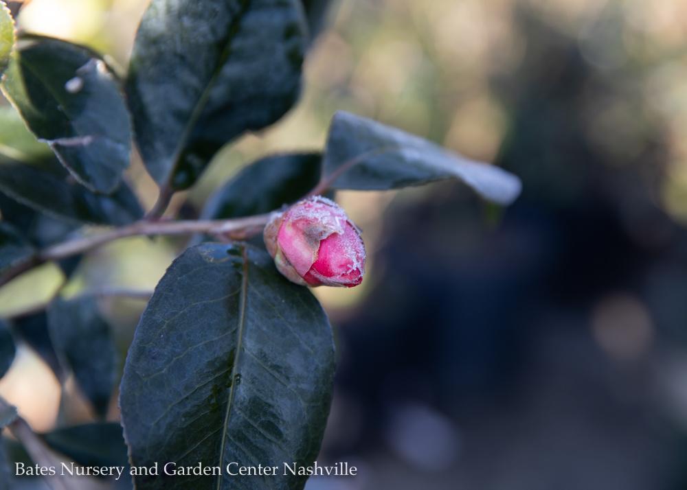 Sunny Valentines and Gardening
