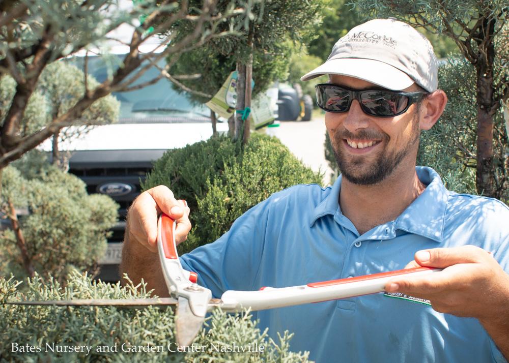 Hands-On Summer Pruning: Tools & Methods