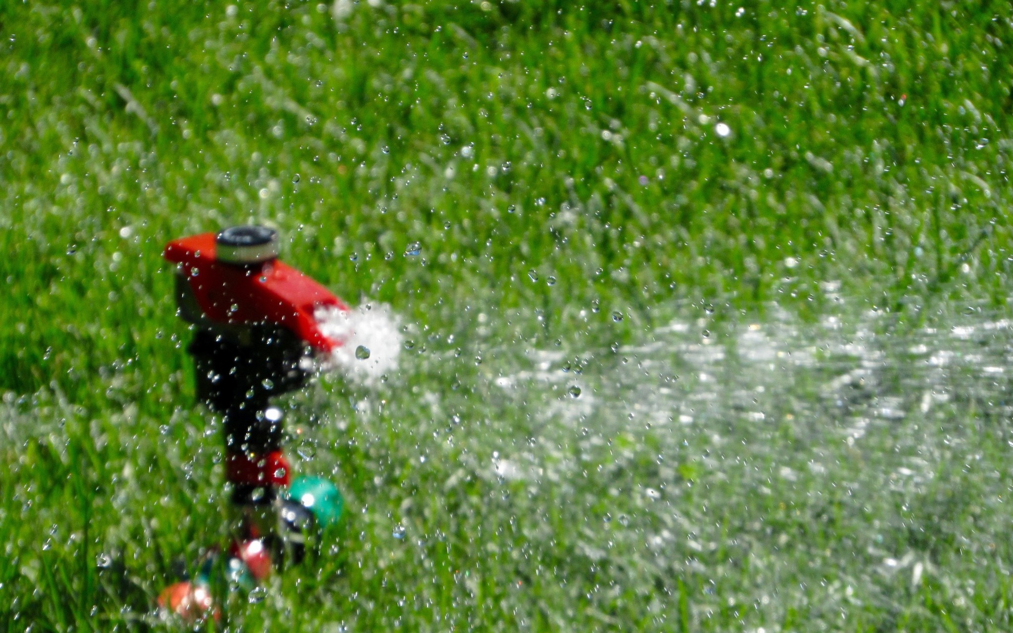 Watering 101: Best Practices for Watering Your Garden