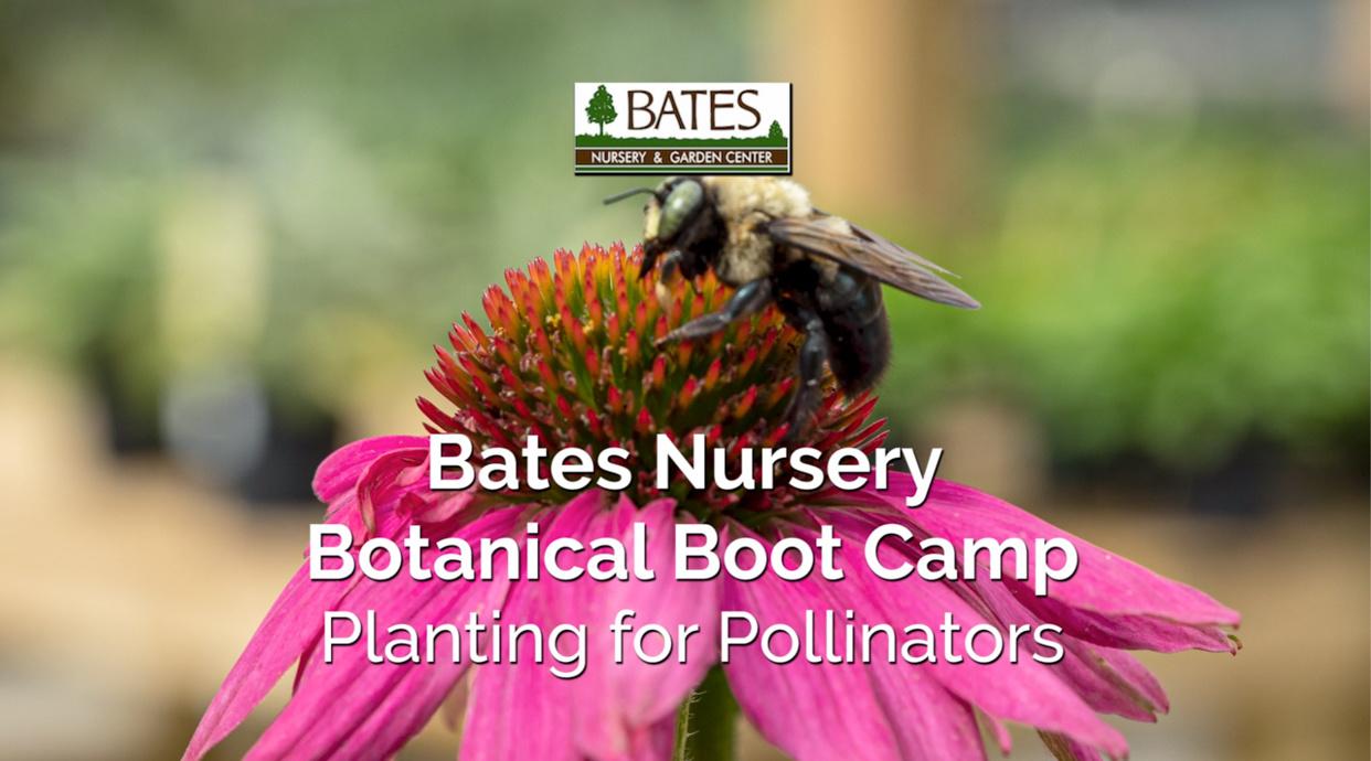 Planting for Pollinators-Fall Blooming Perennials