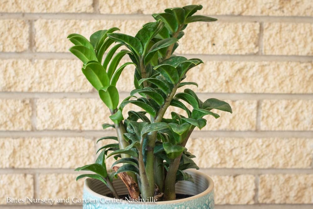 5 Houseplants You Can't Kill | StyleBlueprint Nashville