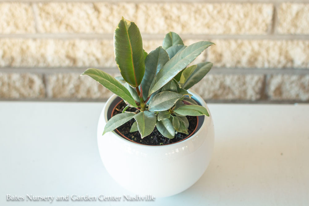 8 Tips to Keep Your Houseplants Alive | StyleBlueprint Nashville