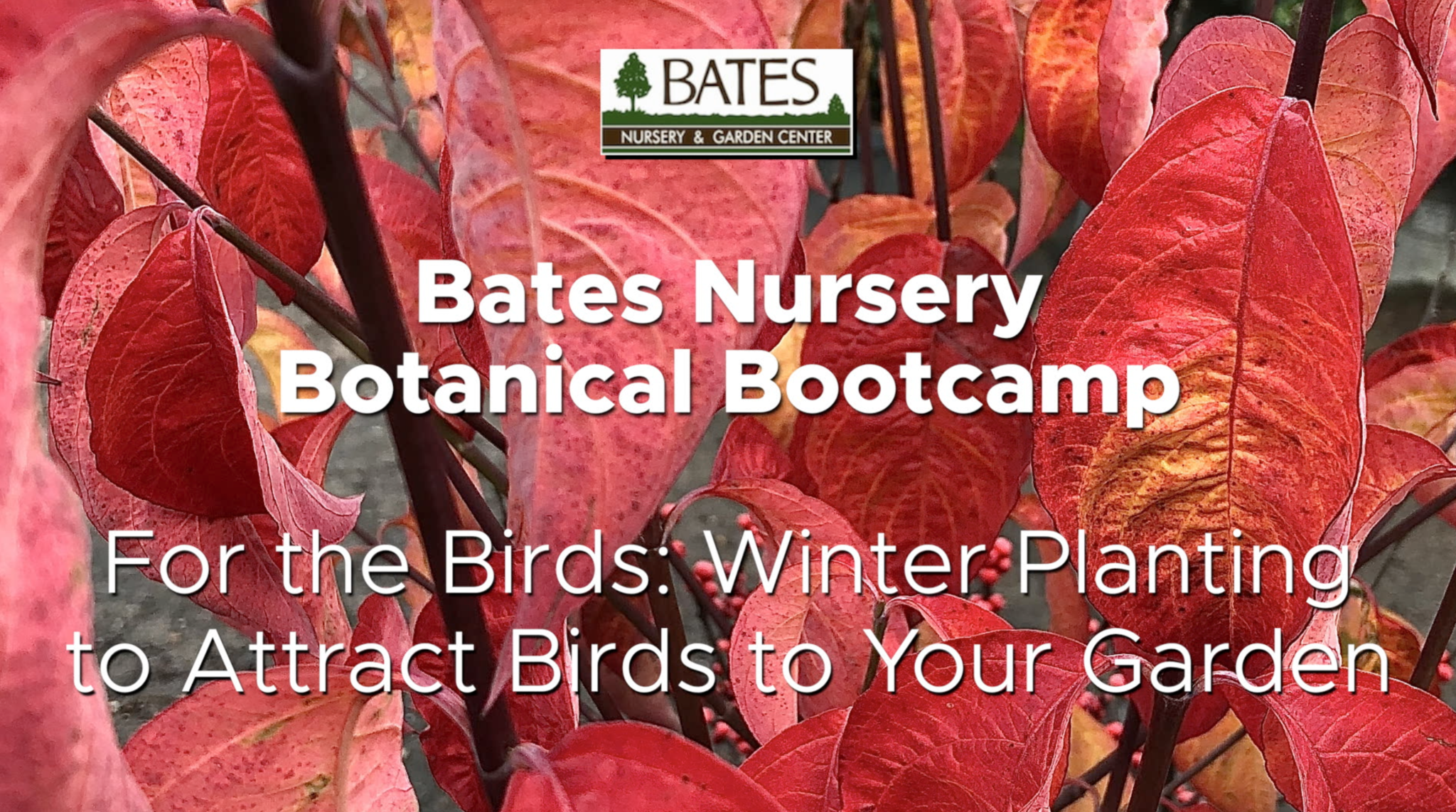 For the Birds: Winter Planting to Attract Birds to Your Garden