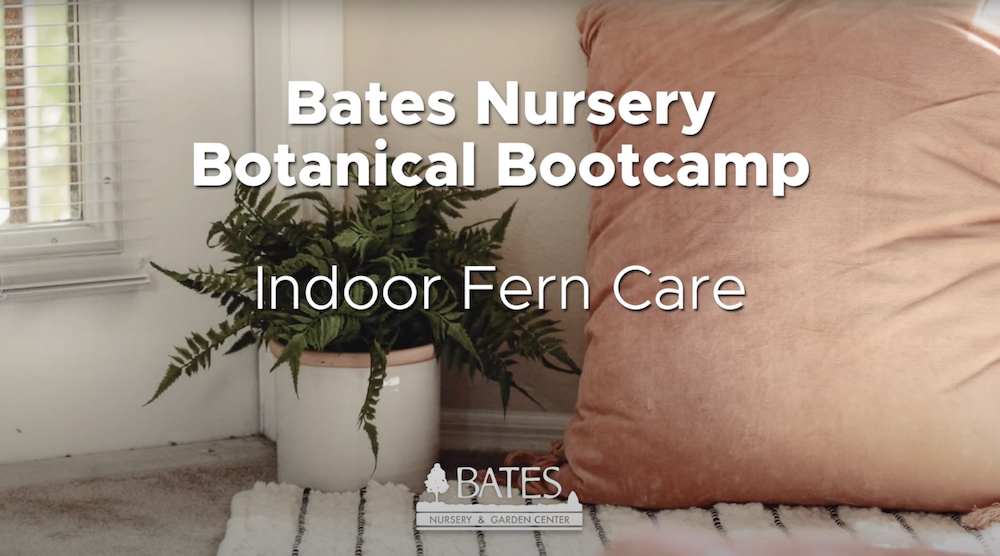 All About Indoor Ferns & Indoor Fern Care