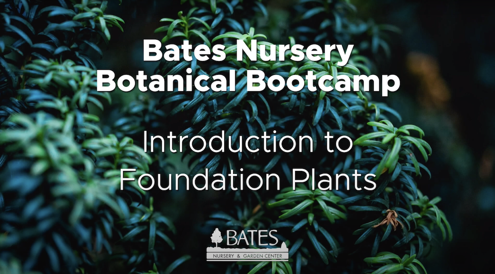 Introduction to Foundation Plants