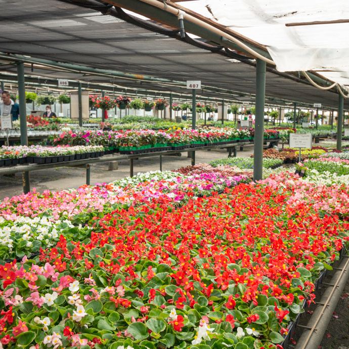 Annual Bedding/Container Plants