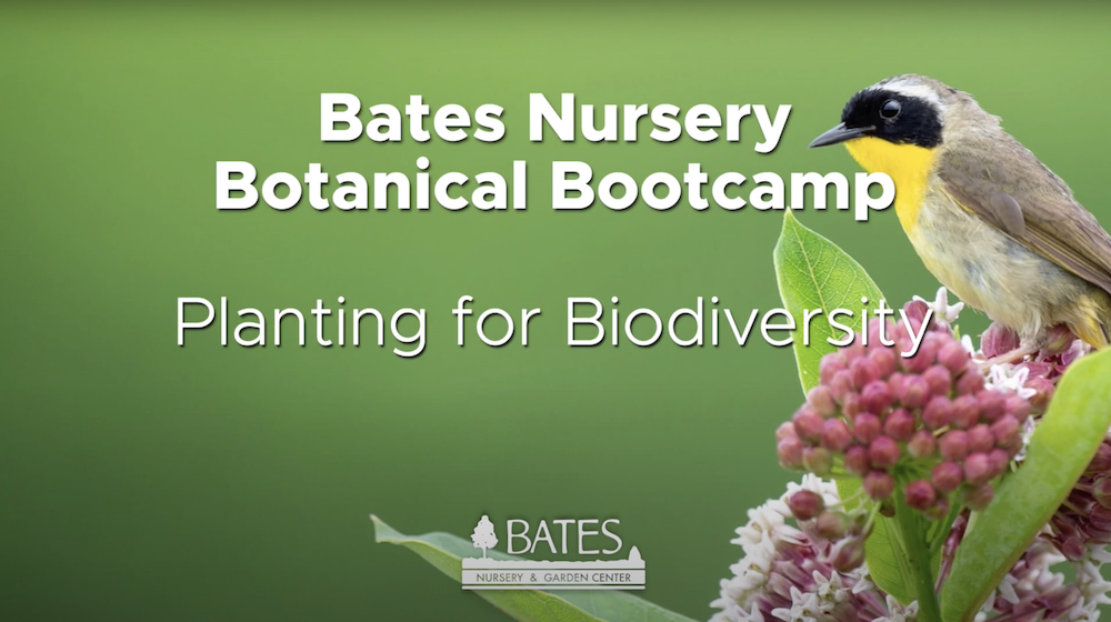 Planting for Biodiversity