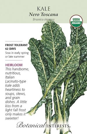 Seed Kale Italian Nero Toscana Organic Heirloom - Brassica oleracea - Lrg Pkt