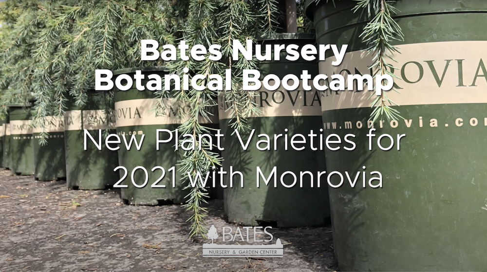 Introduction to New Plant Varieties for 2021 with Monrovia
