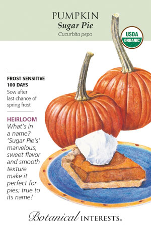 Seed Pumpkin Sugar Pie Organic Heirloom - Cucurbita pepo