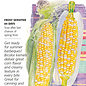 Seed Corn Sweet Honey and Cream (Bicolor) - Zea mays (hybrid)