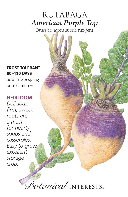 Seed Rutabaga American Purple Top Heirloom - Brassica napus subsp. rapifera