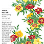 Seed Marigold French Favourite Blend - Tagetes patula