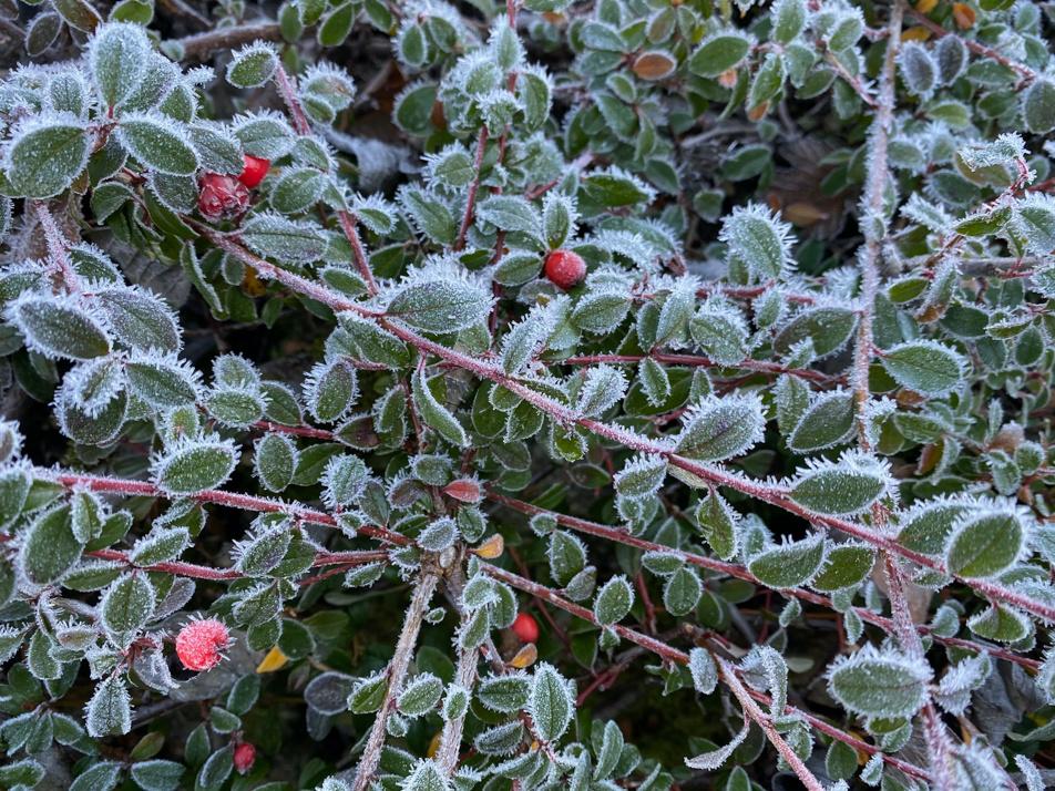 April Freeze
