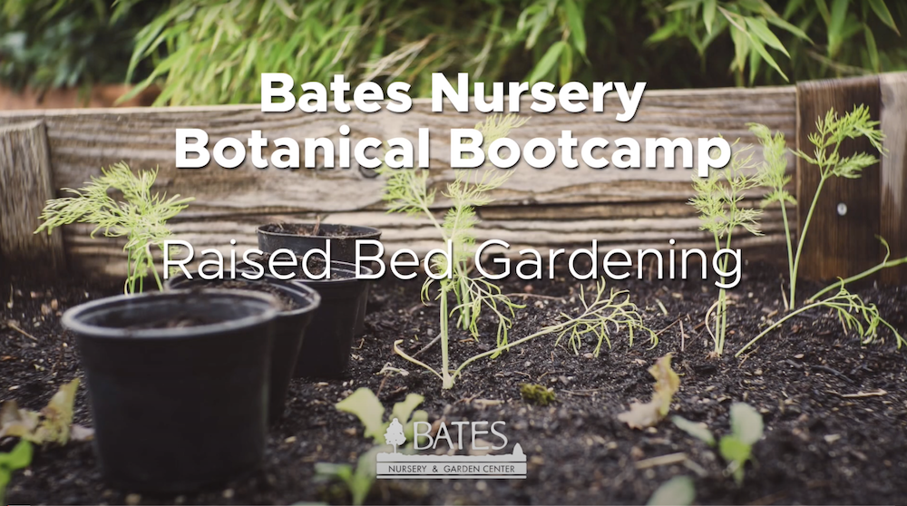 All About Raised Bed Gardening