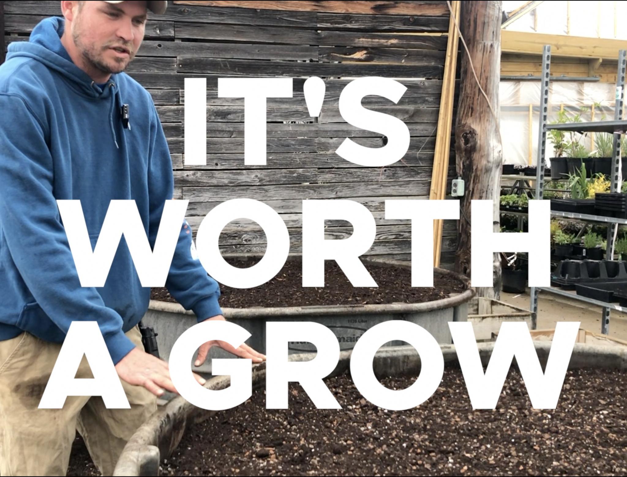 It's Worth a Grow - Fothergilla