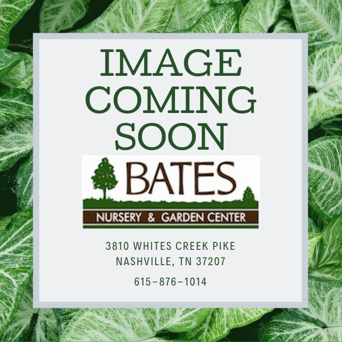 "12"" Hanging Basket Cone Evergreen Moss"