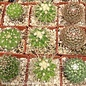 2.25p! Cactus Assorted /Tropical