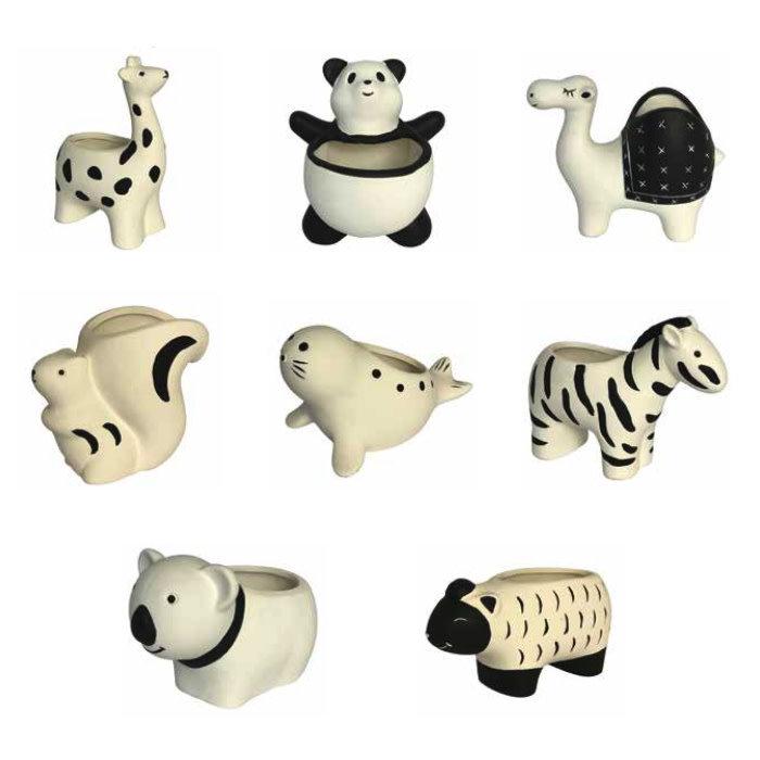 Pot Animal Planter Grffe/Pnda/Cml/Sqrl/Seal/Zbra/Bear/Shp Asst Black/White