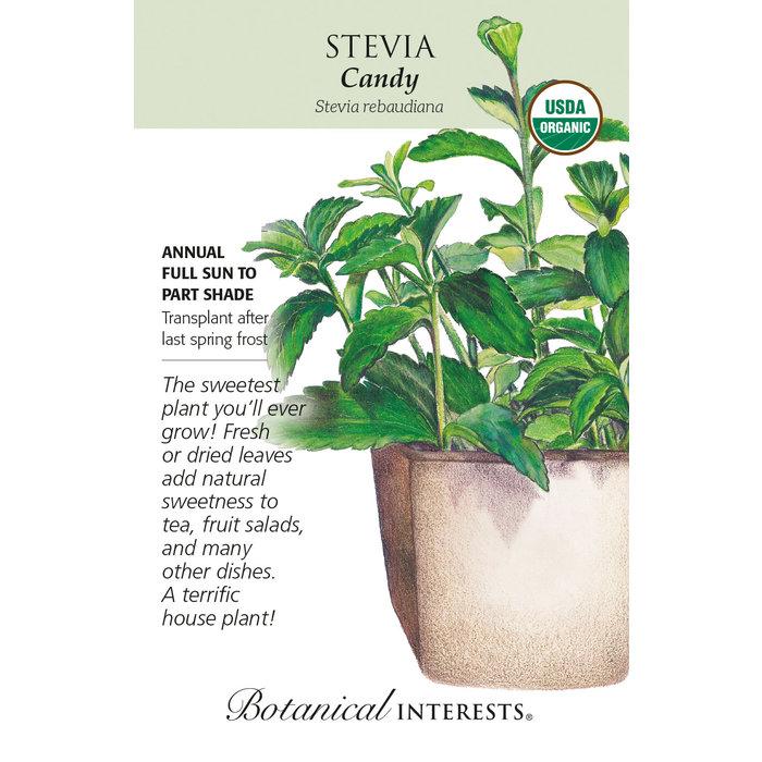 Seed Stevia Candy Organic - Stevia rebaudiana