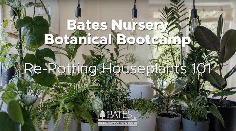 Re-Potting Houseplants 101