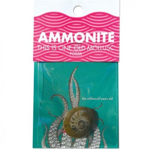Copernicus Toys Ammonite Mollusk Fossil