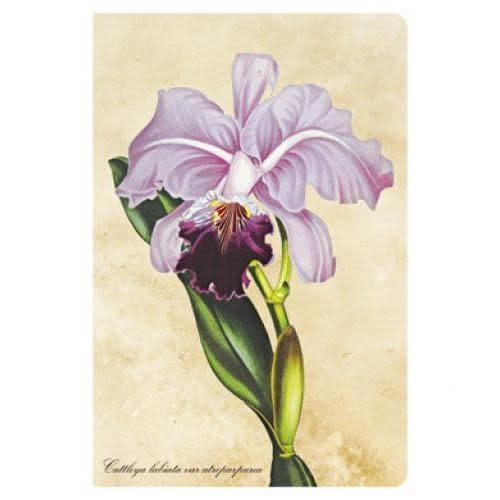 Paperblanks Journals Journal - Mini, Lined - Botanical Brazillian Orchid