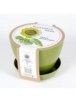 Mano Verde Mini pot -Tournesol nain